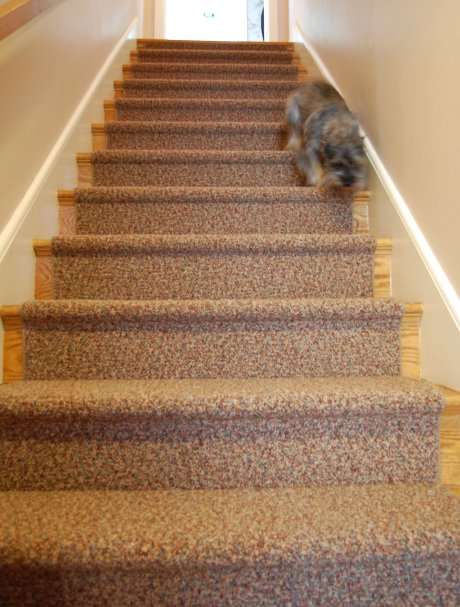 best carpet for stairs related stories FVXMNOL