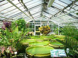 botanical gardens braunschweig botanical garden, braunschweig, germany victoria amazonica,  giant amazon water lily EJZOGKD