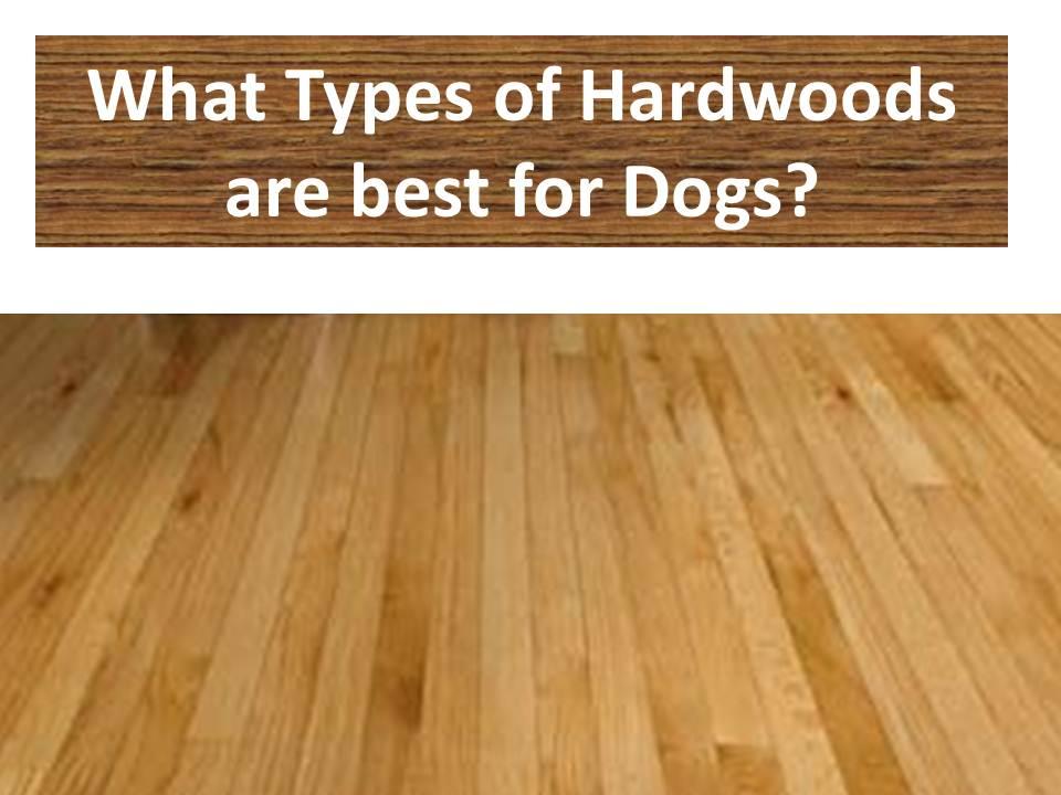 hardwood flooring types decor of best wood flooring for dogs best hardwood floor for dogs types FPWEBJJ