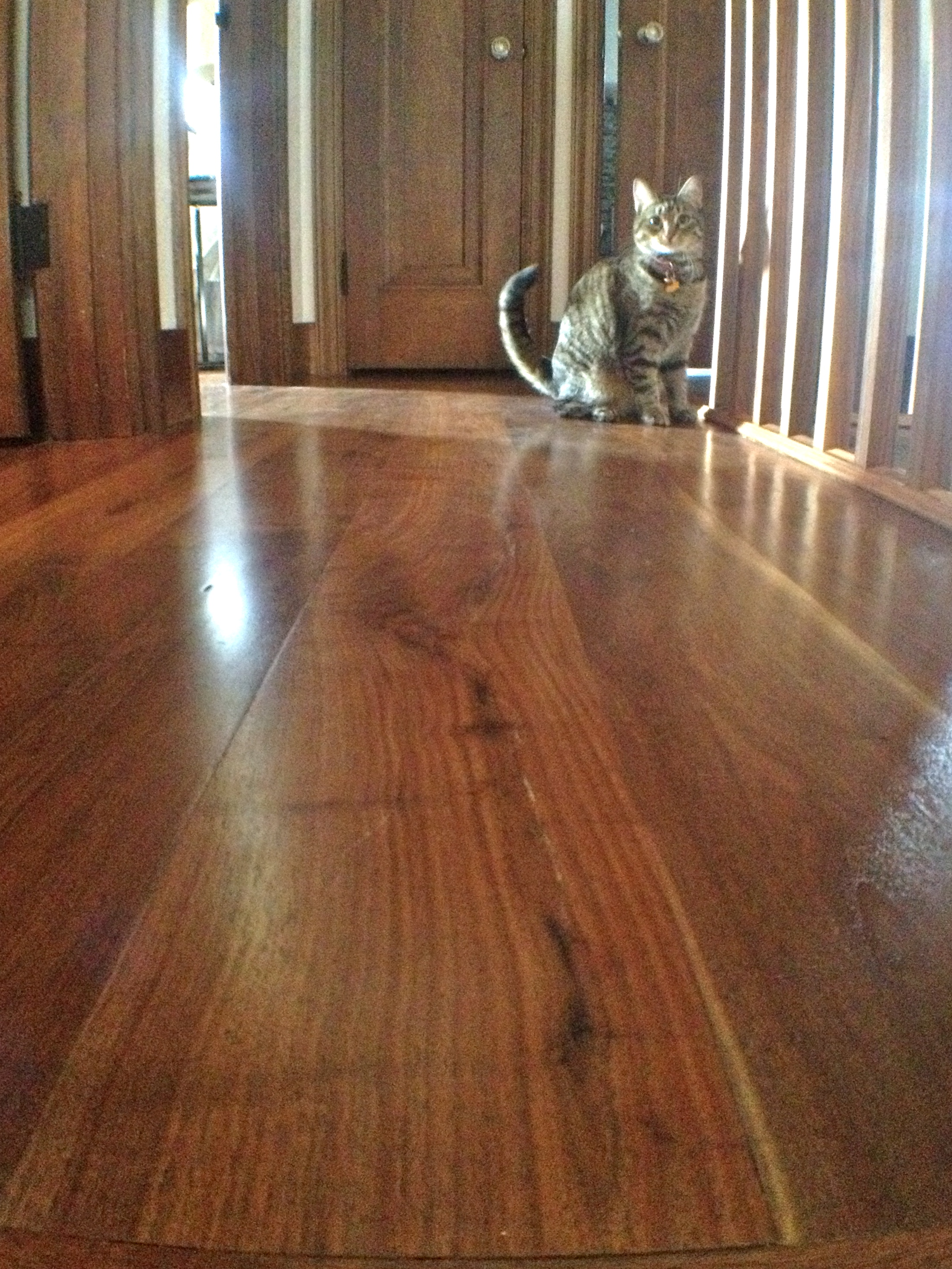 """""""all about the prefinished hardwood floor"""""""