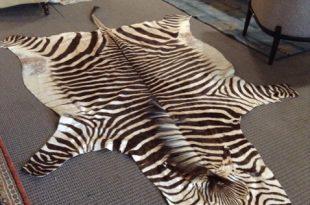 zebra rug trophy-zebra-rug-10x6_77719a.jpg TFKUZAO