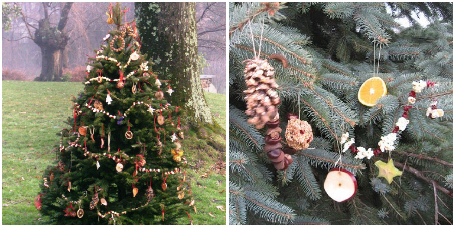 Decorate an Outdoor Christmas Tree With Edible Ornaments for the .