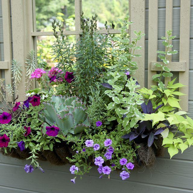 20 Planter Box Ideas to Inspire Y